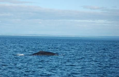 Balena la orizont, miscarea 1