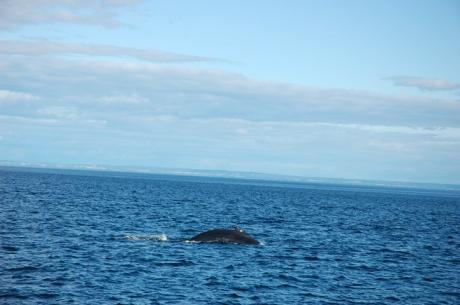 Balena la orizont, miscarea 2